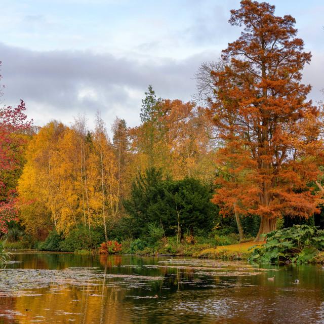 """Autumn Colours Essex Style"" stock image"