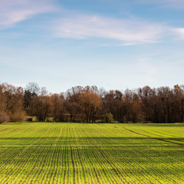 """""""Field sky trees and clouds"""" stock image"""