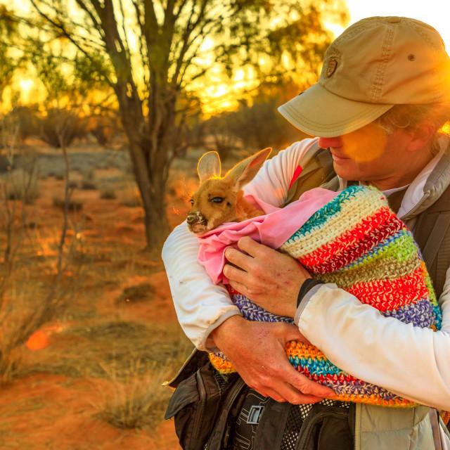 """Tourist man holding orphaned baby kangaroo at sunset sunlight in Australian..."" stock image"