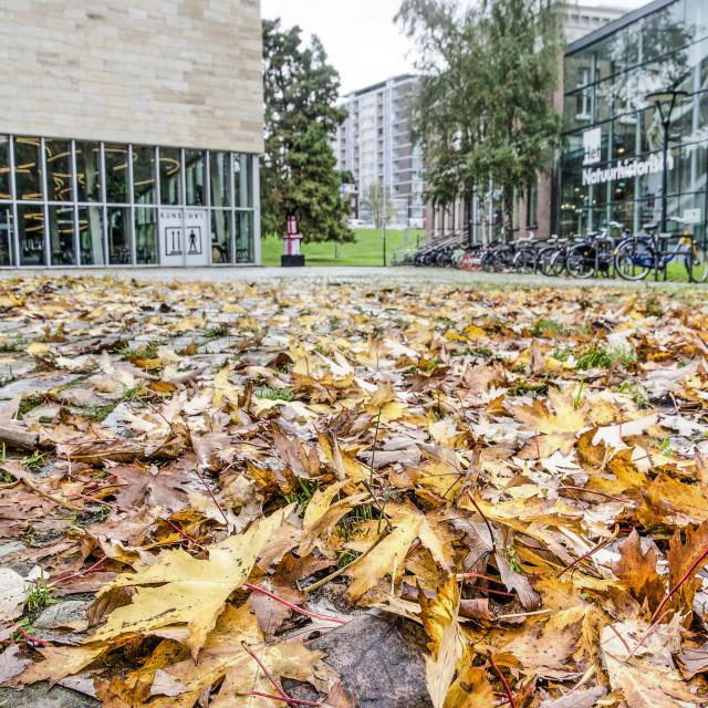 """Fallen leaves in Museumpark"" stock image"