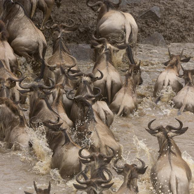 """""""0966 - Kenya, River Mara"""" stock image"""