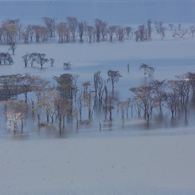 """1274 - Kenya: Lake Nakuru National Park"" stock image"