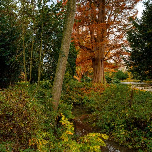 """""""Autumn Colour Contrast"""" stock image"""