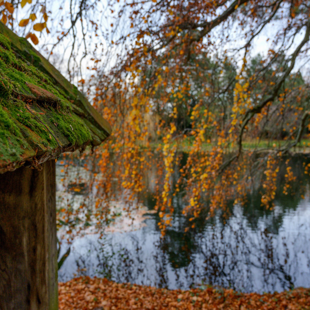 """An Autumn Outlook"" stock image"