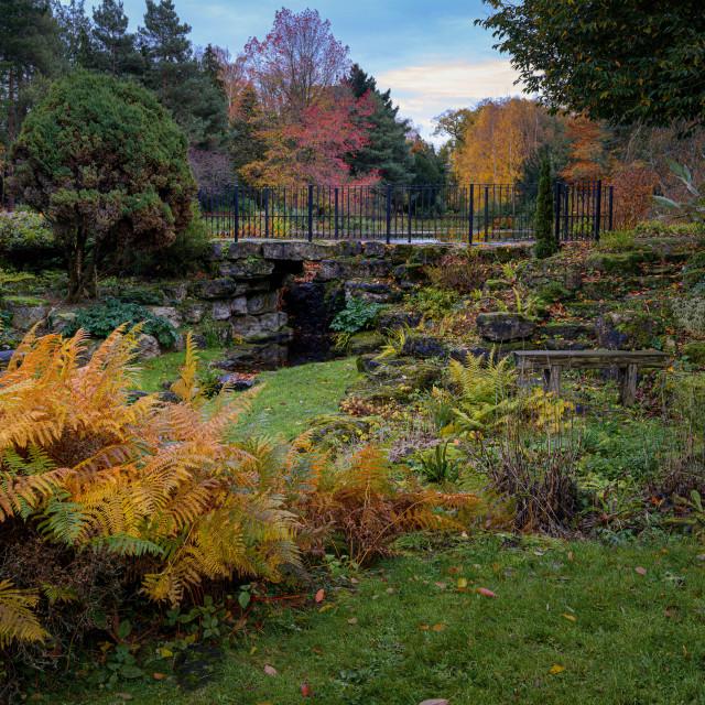 """""""A Secret Garden"""" stock image"""