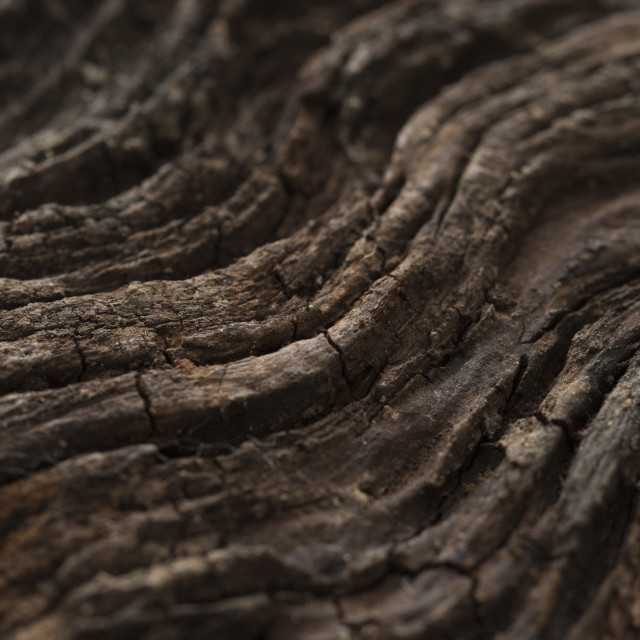"""Background texture and pattern of wavy wood"" stock image"