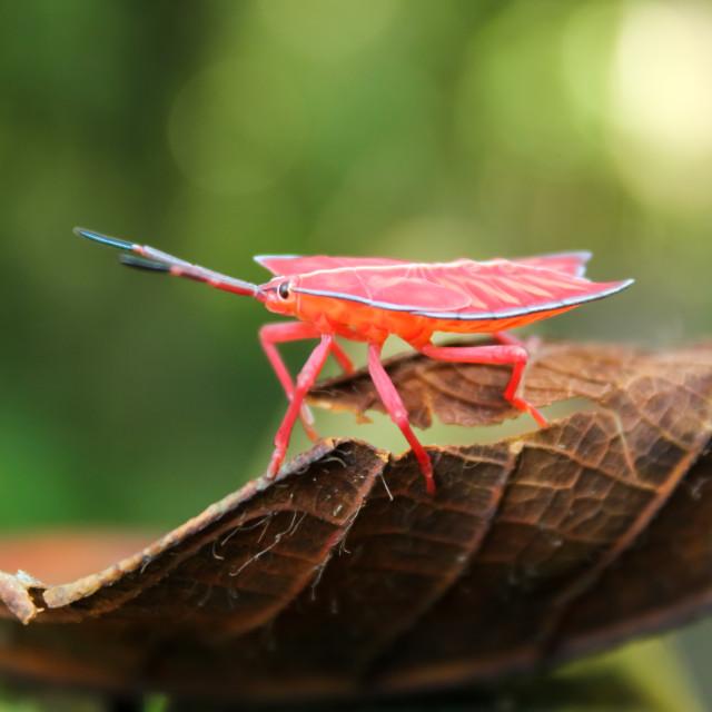 """""""Bug Life"""" stock image"""