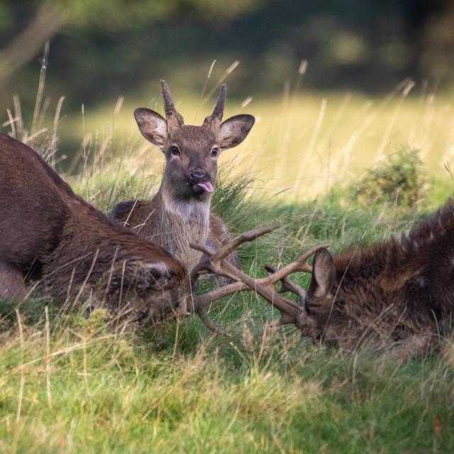 """Funny deer"" stock image"
