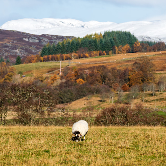 """""""Cairngorms countryside"""" stock image"""