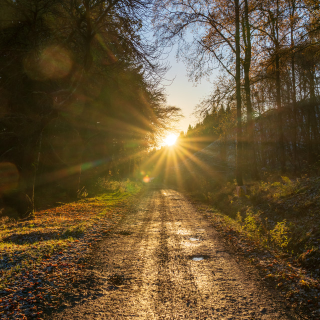 """""""Sunrise in the area surrounding Kindrogan Field studies centre, Perthshire,..."""" stock image"""
