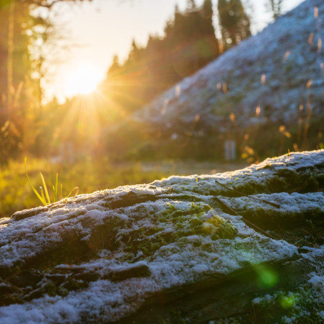 """""""light snow covering a log at sunrise in forests of Perthshire, Scotland"""" stock image"""