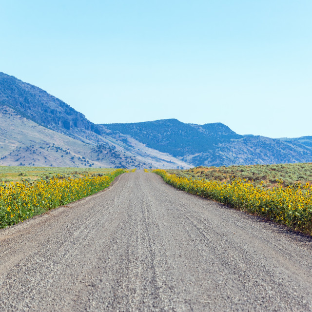 """Wildflowers and Gravel Road"" stock image"