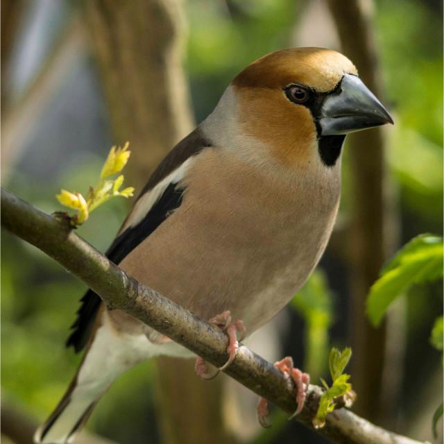 """Perching Bird"" stock image"