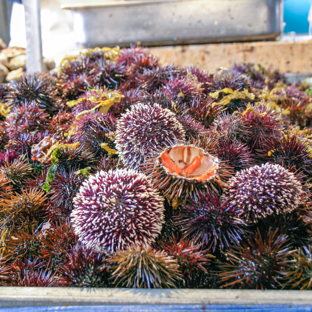"""Fresh raw sea urchins for sale"" stock image"