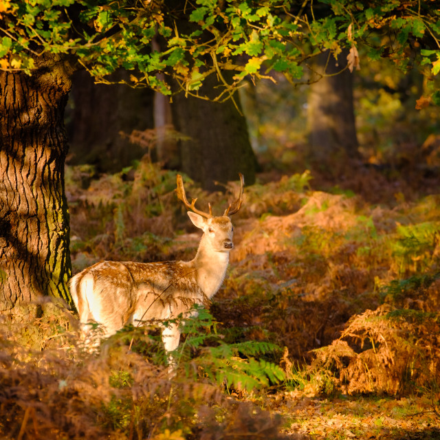 """Richmond Park"" stock image"