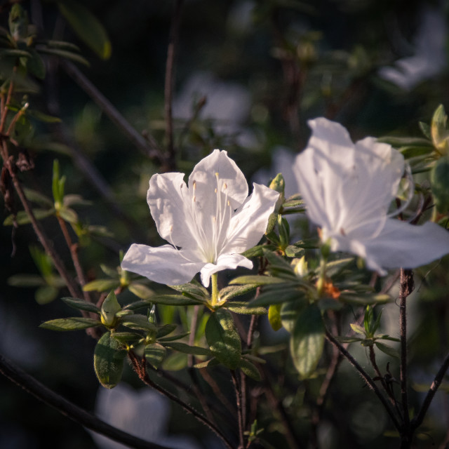 """Portuguese Flowers"" stock image"