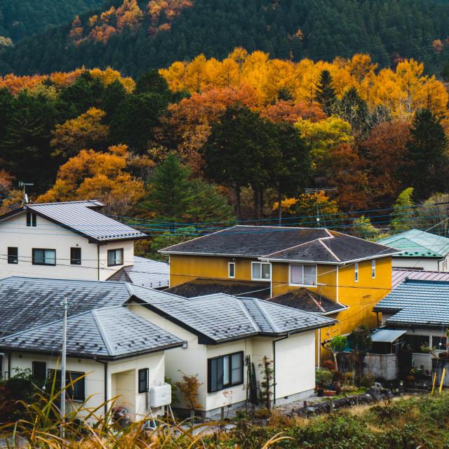 """Autumnal Japan"" stock image"