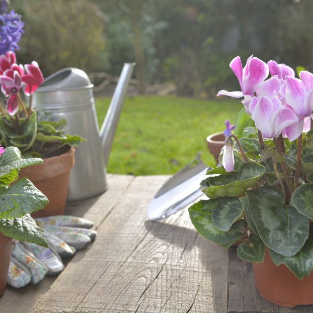 """flower pots and a on a gardening table in a garden"" stock image"