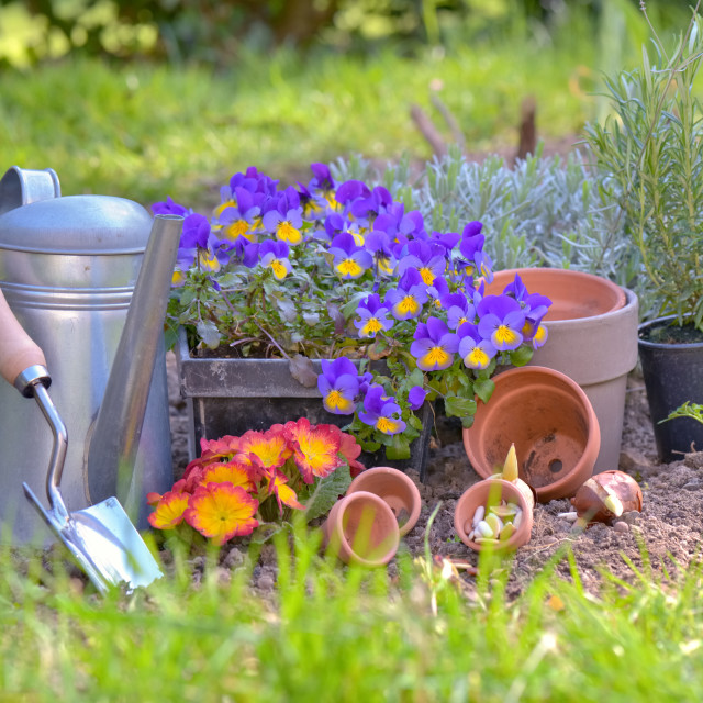 """gardening equipment and flowerpots put on the soil in a garden"" stock image"