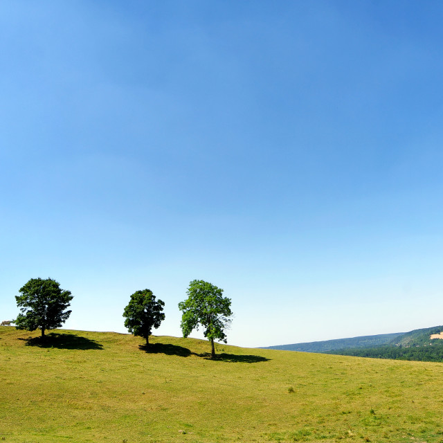 """Trees on the hill"" stock image"