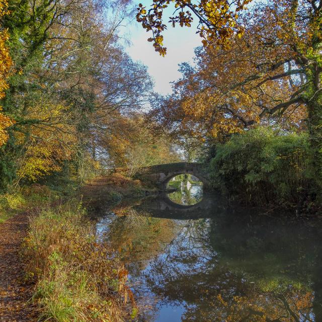 """""""Basingstoke Canal Autumn"""" stock image"""