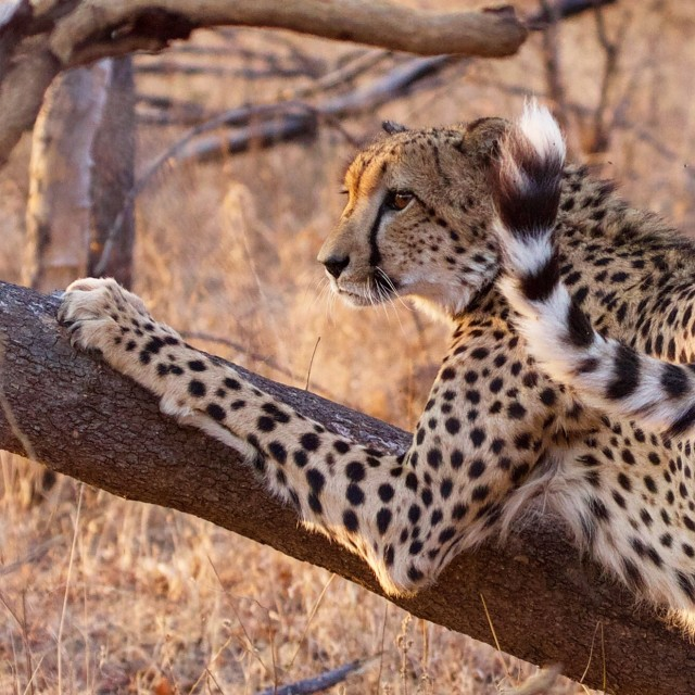 """Scratching Post"" stock image"