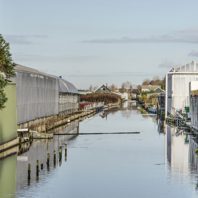 """""""Canal with greenhouses in Boskoop"""" stock image"""