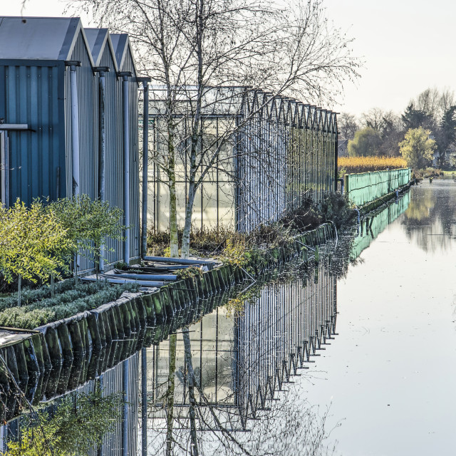 """""""Greenhouses along a Dutch canal"""" stock image"""