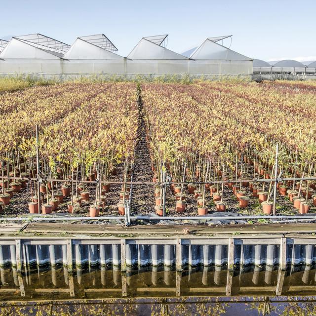 """""""Boskoop greenhouses and nurseries"""" stock image"""
