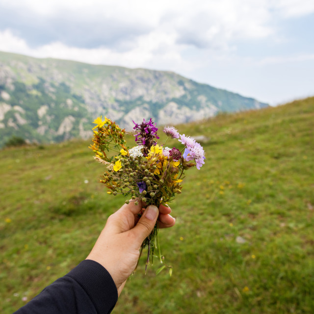 """""""Flowers in the hand of a woman on a background of nature."""" stock image"""