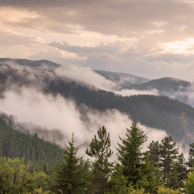 """""""Fog in the forest at Bulgaria."""" stock image"""