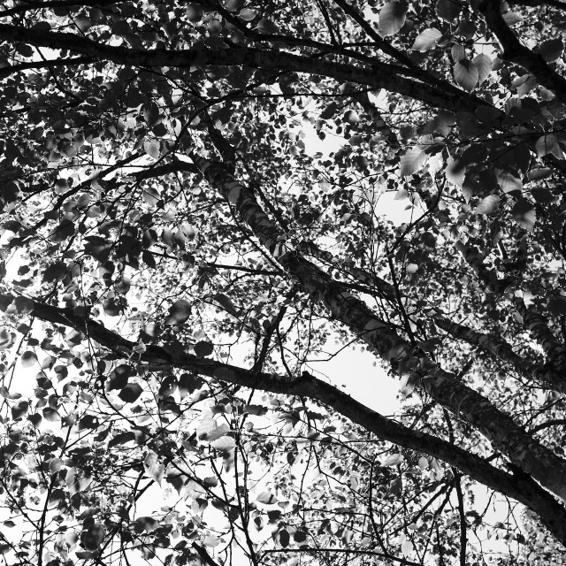 """Black and white image of sun light shining through tree leaves"" stock image"