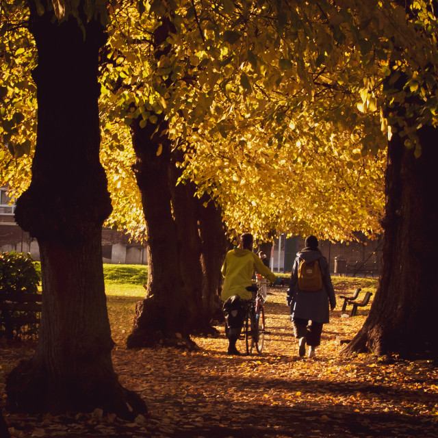 """""""Autumnal Avenue in a London Park"""" stock image"""