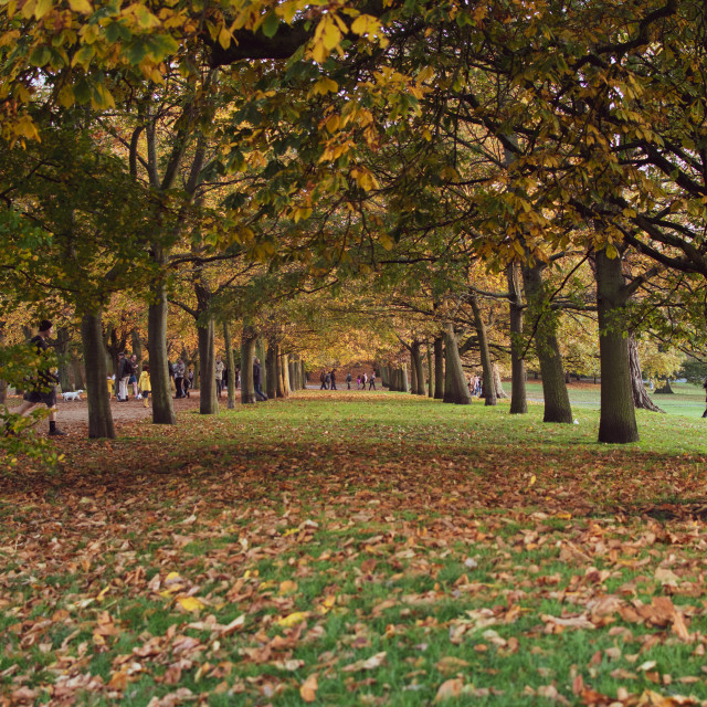 """""""Tree lined avenue in Park"""" stock image"""