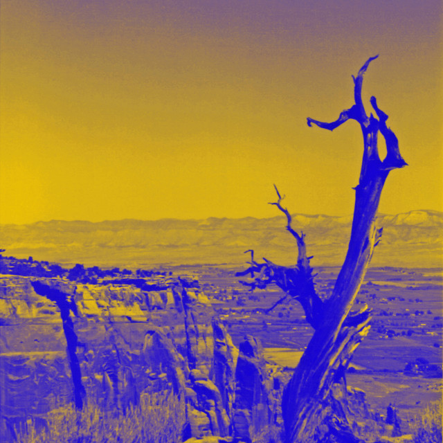 """""""dead tree in yellow and blue"""" stock image"""