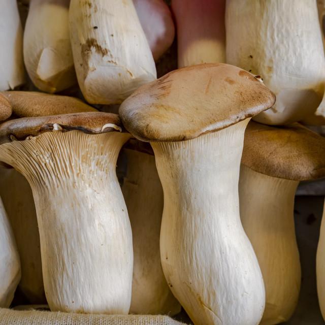 """Trumpet mushrooms sold at a market in Malaga, Spain."" stock image"