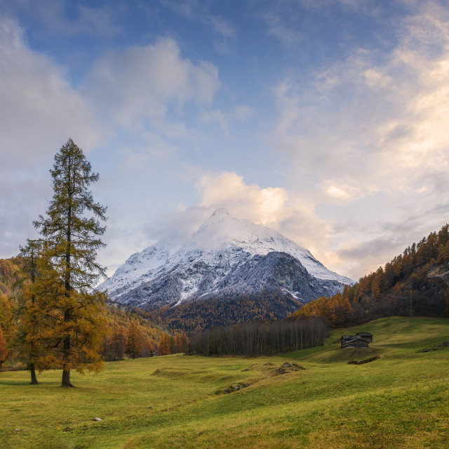 """Larch and tooth"" stock image"
