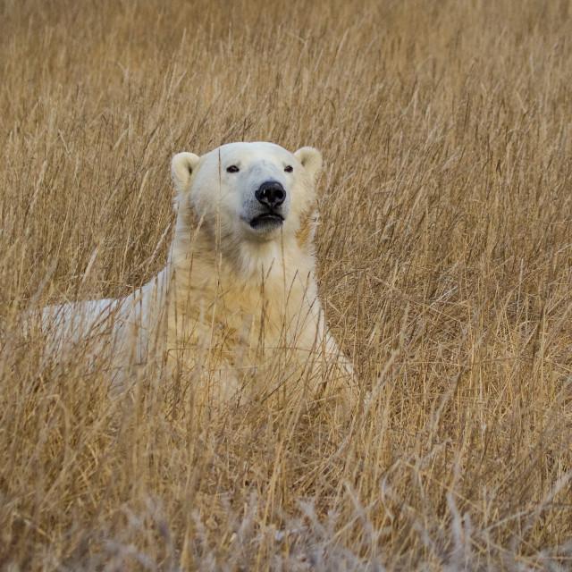 """""""Serengeti of the North."""" stock image"""