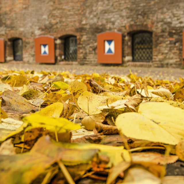 """""""Linden leaves by the old city wall"""" stock image"""