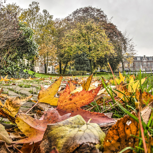 """""""Autumn leaves in the ramparts park"""" stock image"""