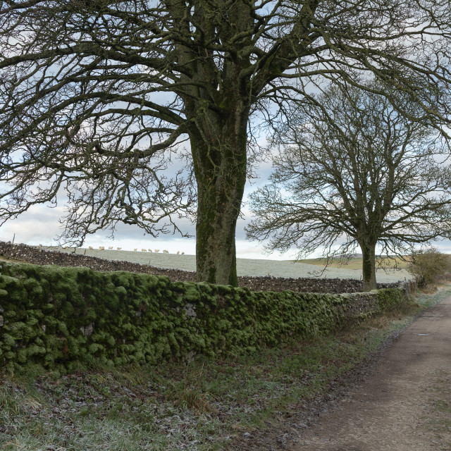 """The Yorkshire Lane"" stock image"