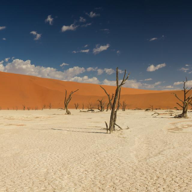 """Panorama of the Dead Vlei salt pan"" stock image"