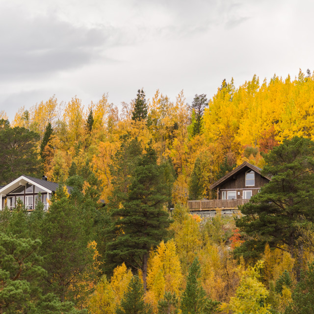 """Cabins with yellow leaves"" stock image"