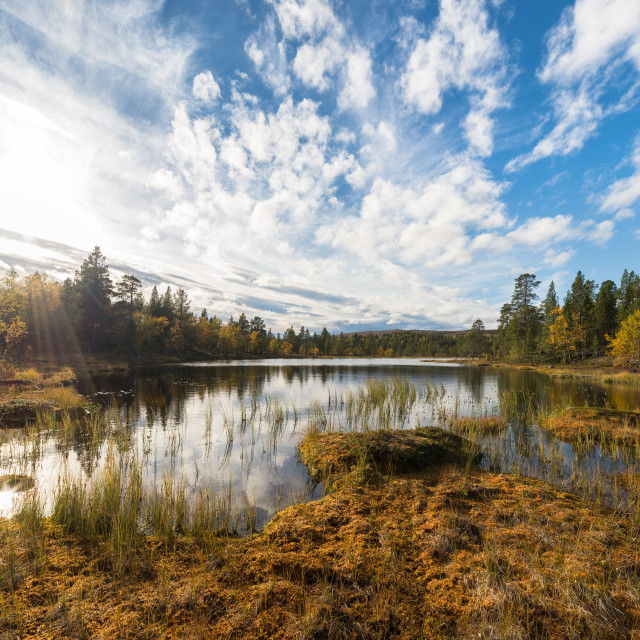 """""""Small pond in autumn"""" stock image"""