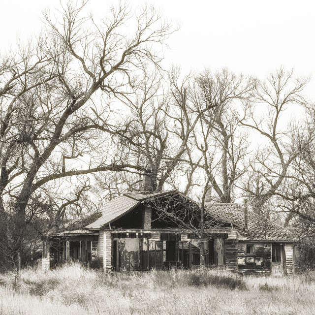 """""""An abandoned house with exterior wall missing surrounded by tall bare trees and tall weeds in a black and white landscape"""" stock image"""