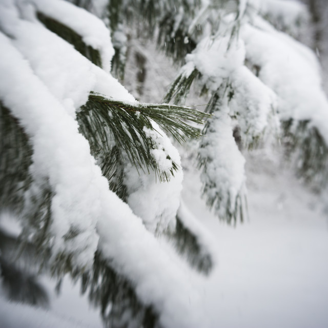 """Snowfall in New England"" stock image"