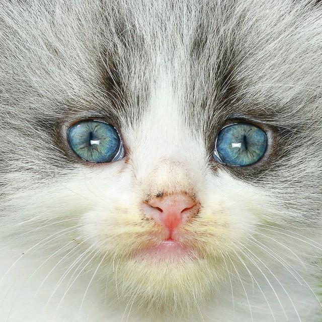 """""""The Blue Eyes"""" stock image"""