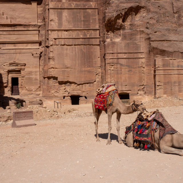 """""""camel rests in Petra"""" stock image"""