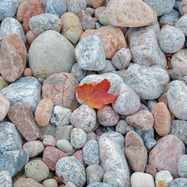"""""""The lonely leaf"""" stock image"""
