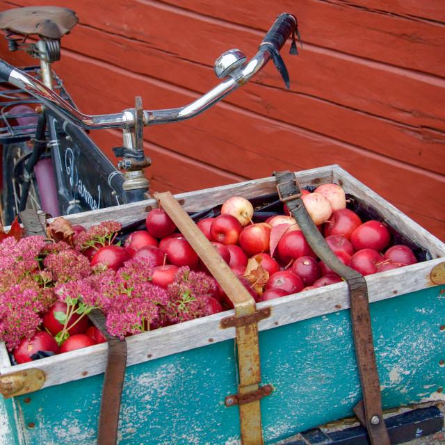 """""""A bike full of apples"""" stock image"""